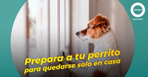 Cómo preparar a tu perrito para quedarse de nuevo solo en casa